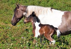 Infos zum Thema Pferde und Reiten