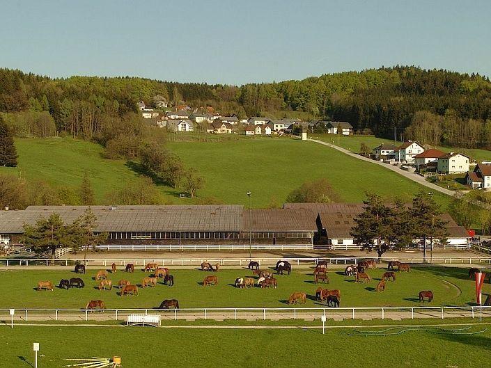 partnersuche reiter pferdefreunde uhr