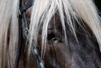 Reiturlaub für Sie und Ihr Pferd an der Küste von South Carolina, USA!