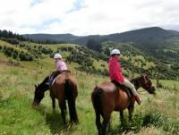 Silver stream horses