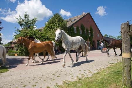 Ferien-/ Urlaubsbetrieb, Pensionsstall / Pferdepension, Bauernhof, Reiterhof, Ponyhof, Reiterpension in Hooksiel - Wangerland