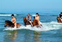 Stald Nordkap: Reiten am Strand mit Islandpferden in Nordwest-Jütland, Dänemark