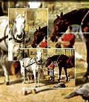 Abenteuer Pferd, Natur erleben - der Pferdehof Walther im herrlichen Erzgebirge südlich von Chemnitz