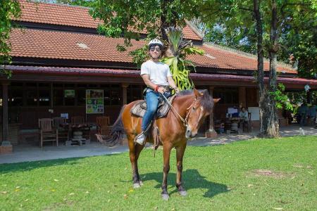 Happy Ranch Horse Farm in Siem Reap / Alle Regionen