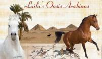 Laila Oasis Arabians - Reiturlaub in Ägypten - Wüstenritte in Ägypten!