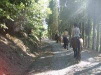 Fattoria il Poeta: Reiten, Wandern, Kochen auf einem kleinem Bauernhof in der Nähe von Florenz