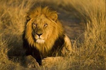 Plains of Africa Safaris in Zentral-Kalahari Tuli-Block / Alle Regionen