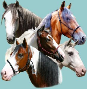 Painted Pony Guest Ranch in Portegolpe, Santa Cruz, Guanacaste / Alle Regionen