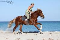 Reiten u. Erholung am Strand / Meer in Tunesien: Holländischer Reitstall Zitouna, edle Araber/Berber