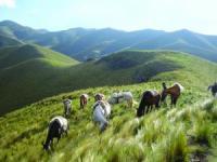 Dos Lunas - Reiturlaub in Alto Ongamira - Cordoba, Argentinien!