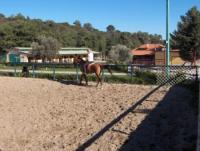 Reiterferien auf Rhodos - Reiten für Jedermann im Riding club of Rhodes 'kadmos'