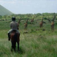 Inside Africa Safaris - Reiturlaub in Afrika!