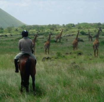 Inside Africa Safaris in Nairobi / Alle Regionen