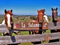 Reiturlaub in Uruguay - Reiten auf historischen Wegen!