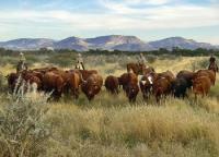 Namibias 1. Westernriding Ranch - ein gelebter Traum. Es muss nicht immer Amerika sein. Natur pur.
