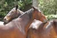 Reiturlaub auf Costa Rica! Genießen Sie tropische Ferien mit wunderbaren Pferden!