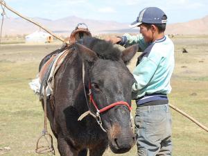 eine junge mongolische Reiter in Arkhangai Provinz
