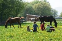 Reitklub Noxwel - Reiturlaub in Secovce - Reiten in der Slowakei!