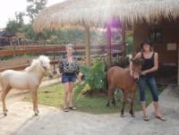 Horse Adventure Bali - bei uns erlebt jeder etwas besonderes ! Stable Kuda Bahagia