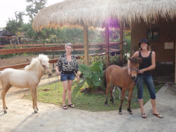 Bali Horse Adventure in pecatu / Bali