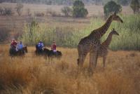 Colin's Horseback Africa - Einzigartiger Reiturlaub mit lieben Pferden in Pretoria, Südafrika!