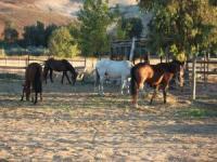 NewMexicoOutdoor - Reiturlaub in Medanales, New Mexico, USA!
