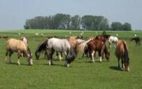 Ikkos Equine Sanctuary and Animal Haven