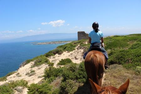 Sardinienhorse in Abbasanta / Sardinien