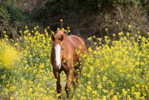Die Pferde leben auf riesengroßen Koppeln