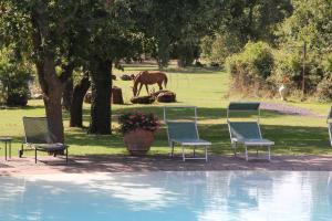 Die Pferde grasen friedlich ganz Nahe am Pool
