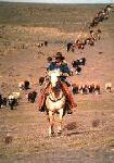 Colorado Cattle Company - im Herzen der Prärie nahe New Raymer in Colorado, USA