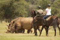 Horizon Horseback Adventures - Reiturlaub in Vaalwater, Waterberg, Gauteng, Südafrika!