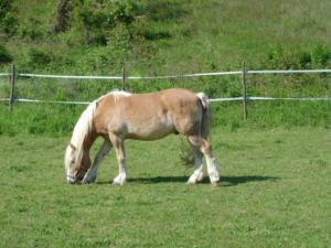 Pferdtrekkingtour nach der Toskana