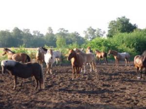 Wir haben viele verschiedene Pferde von 1m - 1.60m