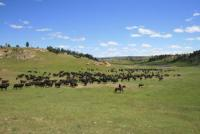 Kara Creek Ranch: eine echte Working Cattle Ranch in Sundance, Wyoming, USA