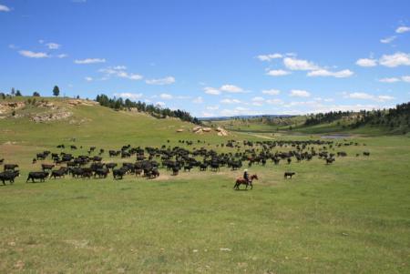 Ferien-/ Urlaubsbetrieb, Ferien-/ Gästeranch, Arbeitsranch, Rinderfarm in Sundance