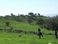 Tour Israel - Sirin Riders - Reiturlaub in Israel!