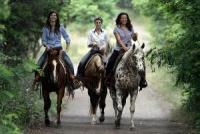 Westernreiten in Ungarn im wunderschönen Kunsagi Park auf Quarter-Pferden und Appaloosa-Pferden