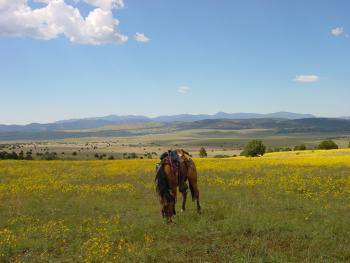 N Bar Ranch in Grass Range / Reserve (60 km) / New Mexico