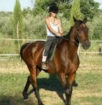 Villa Conca Marco: Reiturlaub in Apulien am Meer. Dressurpferde, Spanische Hofreitschule und Pferde
