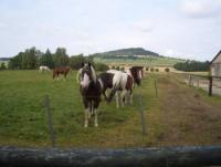Urlaub mit Pferden auf der American Eagle Ranch mit Campingplatz Country Camp Adler