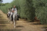 Reiterferien für Jedermann auf der Ranch Montelongo in Rovinj (Istrien) Kroatien