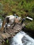 Durch den wilden Kaukasus - Wanderritt in Georgien