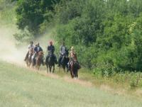 Western und Wanderreiten in der Nähe von Budapest auf der L-Ranch, Ungarn!