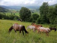 Freizeitreitstall Kapellenhof  - Natur- und Reitparadies - Pension - in Bayern
