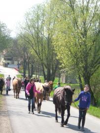 Ferienkinder holen ihre Pflegepferde von der Weide