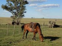 Traditionelles und ländliches Uruguay - Reiturlaub in Uruguay, Lateinamerika!