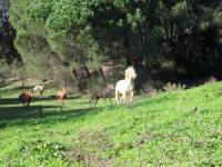 Reiterferien in Caldana in der südlichen Toskana, Maremma, Italien
