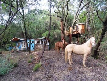 Ferien-/ Urlaubsbetrieb, Ferien-/ Gästeranch, Ranch Resort, Bauernhof, Ponyhof, Kinderferienbetrieb in Caldana (Grosseto)