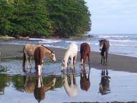 Reiturlaub in Cahuita auf Brigittes Pferde Ranch an der karibischen Küste von Costa Rica